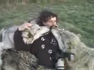S-a apropiat prea mult de o haita de lupi si a vrut sa ii fotografieze. Ce a urmat a devenit viral