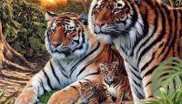 La prima vedere ai impresia ca vezi 4 tigri. Ce se intampla daca privesti cu atentie imaginea