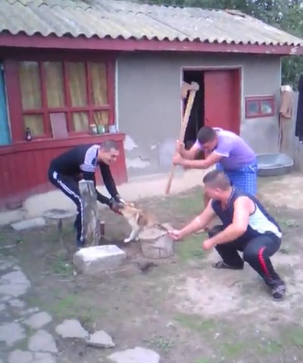 Cum au fost pedepsiti cei doi BARBARI care au taiat coada cainelui cu un topor