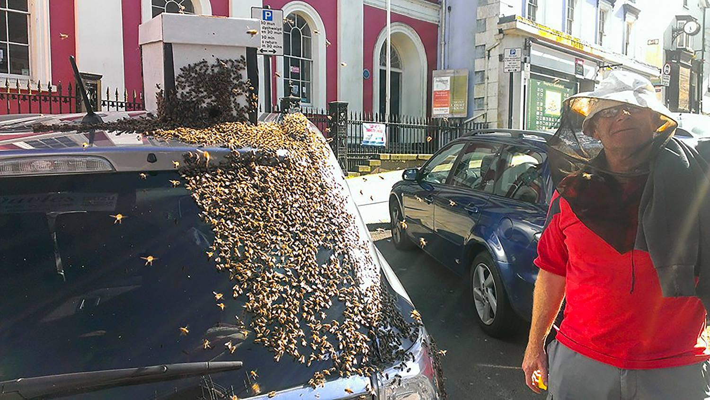Motivul pentru care 20.000 de albine au urmarit timp de doua zile aceasta masina. Ce a descoperit apicultorul care a deschis portbagajul: FOTO