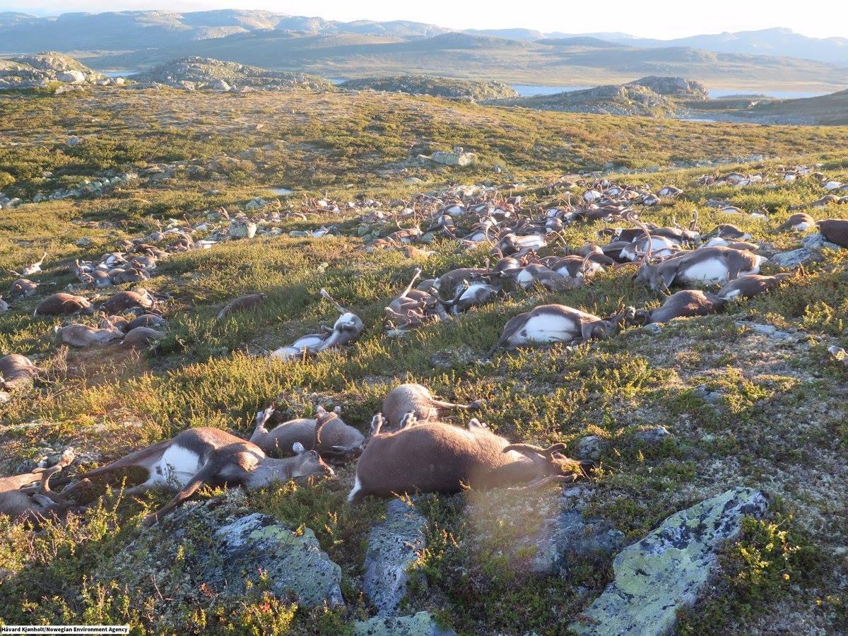 Imagini socante: 330 de animale au murit. Ce eveniment tragic s-a intamplat