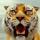 Life of Pi, cel mai bun film 3D al anului: Ang Lee dezvaluie secretele tigrului Richard Parker, personajul de care s-a indragostit toata lumea in filmul cu 11 nominalizari la Oscar