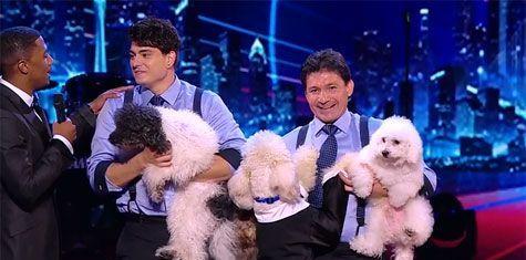 SURPRIZA: Un numar de dresura canina a castigat Marele Premiu de la  America s Got Talent . VIDEO