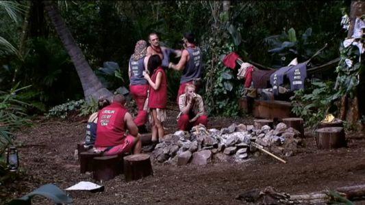 Aliantele celebritatilor din jungla