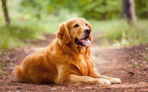 Concurs international canin la Bistrita Nasaud. 500 de caini au defilat si si-au etalat frumusetea si tinuta