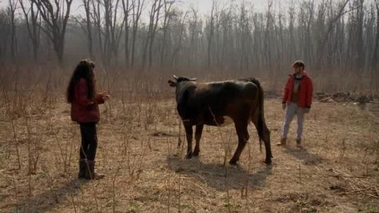 Concurentii nu reusesc sa tina in frau vaca