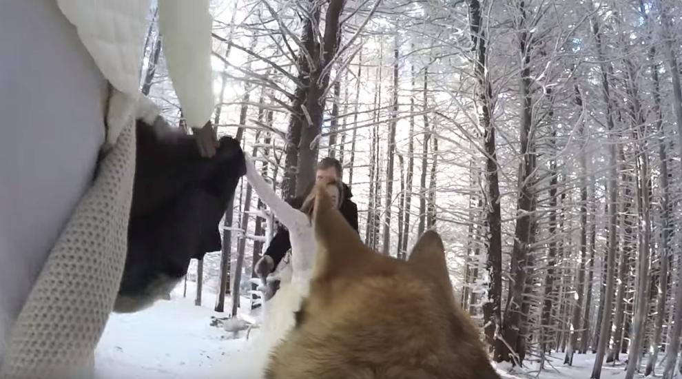 I-au montat cainelui o camera GoPro si sa il lase pe el sa le filmeze nunta. Ce au descoperit cand s-au uitat pe filmare