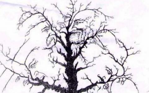 Nimeni nu poate sa isi dea seama cate chipuri sunt in acest copac. Noi am vazut doar sapte