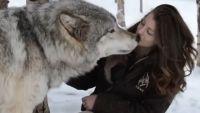 A intalnit in padure un lup imens. Ce s-a intamplat cateva momente mai tarziu a devenit viral - VIDEO