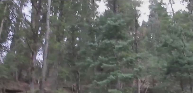 A lasat camera video pornita in timpul unei plimbari prin padure. Ce a observat cand s-a uitat la filmare