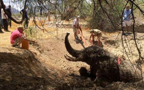 Un elefant a stat o noapte captiv intr-o groapa cu noroi. Ce au facut oamenii cand l-au descoperit merita tot respectul