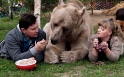 A fost salvat pe vremea cand era doar un pui de o familie cu inima mare. 23 de ani mai tarziu, imaginile cu acest urs fac senzatie pe internet