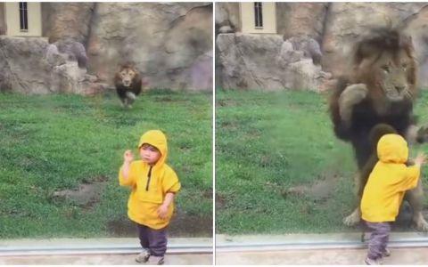 Un baietel simpatic a mers in vizita la zoo. Ce s-a intamplat in momentul in care s-a apropiat de tarcul leului