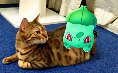 O multime de oameni publica imagini care demonstreaza ca animalele lor pot detecta Pokemoni. Dovezile care fac furori pe internet