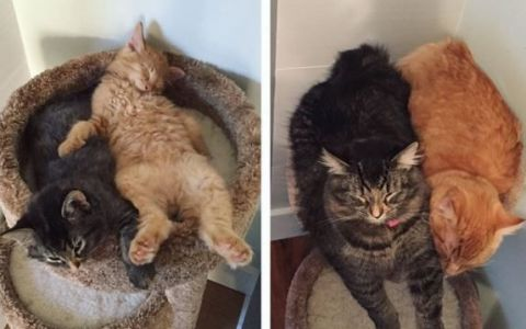 Au crescut, dar se incapataneaza sa imparta acelasi pat. Imaginile pe care iubitorii de animale le vor adora