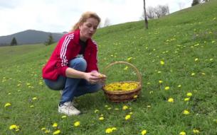 Floarea-medicament care le aduce profit localnicilor din Apuseni. Cu cat se vand papadiile pentru sirop si dulceata