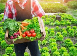 Proiectul prin care bucurestenii pot sa aiba o gradina de legume gratis.  E mult mai frumos cand sunt crescute de tine