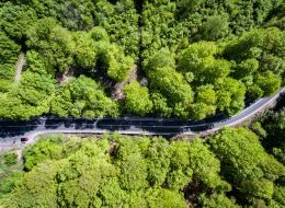Sute de copaci din Gorj, vopsiti pentru a atrage atentia asupra defrisarilor ilegale