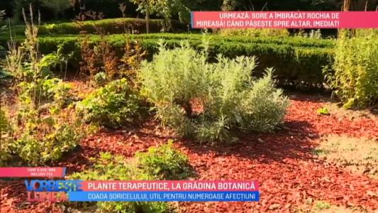 Plante terapeutice, la gradina botanica