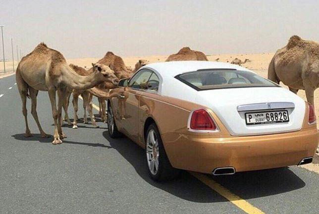 10 lucruri extrem de scumpe pe care si le permit milionarii din Dubai. Excentricitatile de care se bucura in fiecare zi