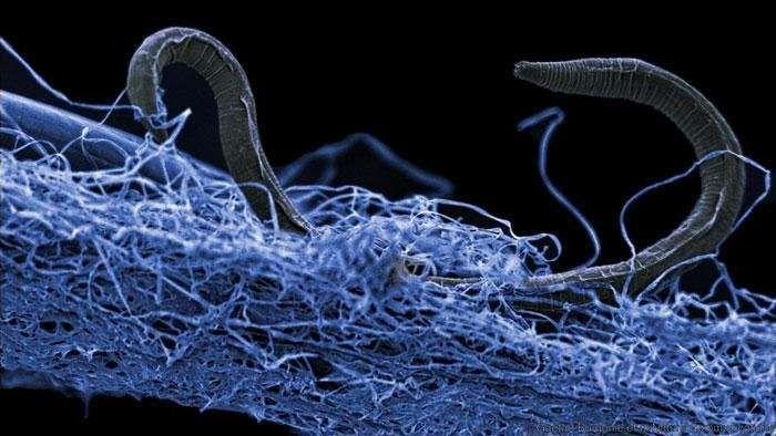 YODA.RO Un ecosistem uriaș, descoperit în subteran! Ce specii trăiesc aici