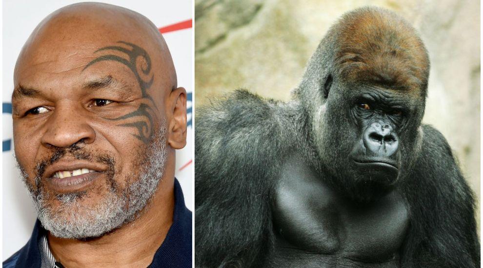 Mike Tyson, dezvăluire șocantă: A dat 10.000 de dolari pentru a se lupta cu o gorilă de la Zoo
