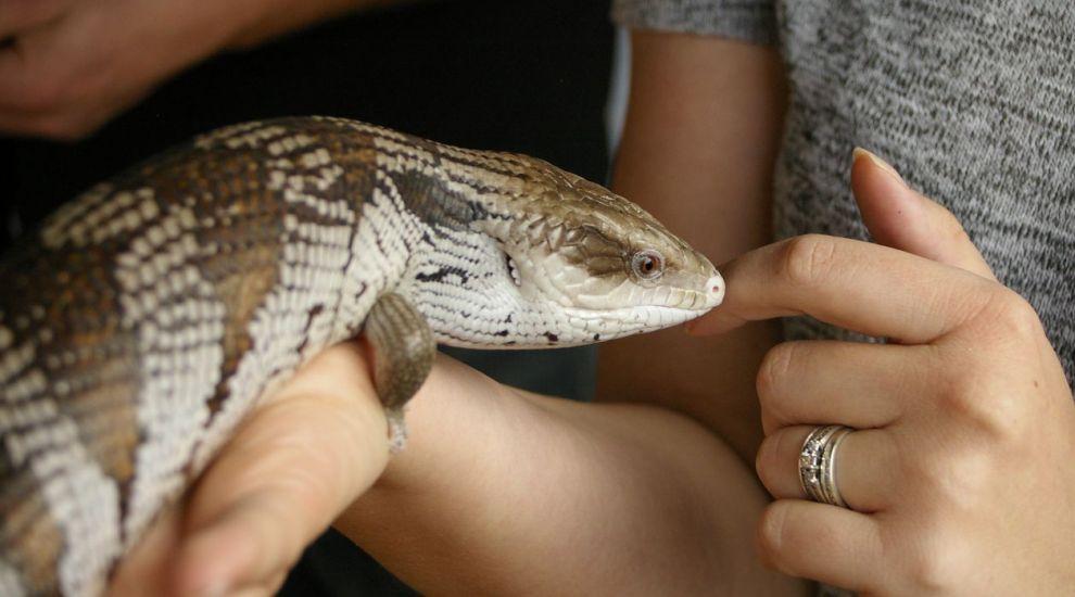 VIDEO Animale exotice de companie