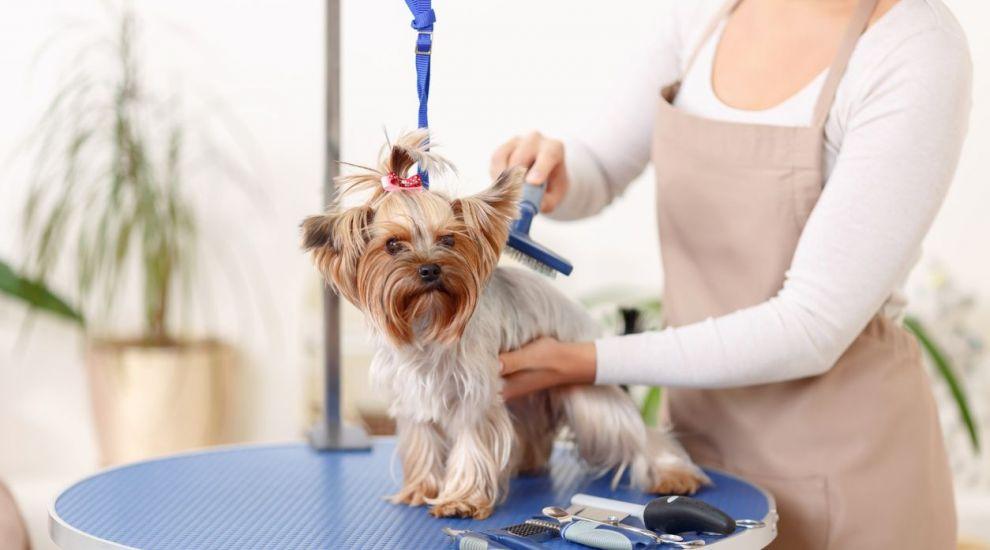 VIDEO Îngrijirea câinilor pe timpul verii