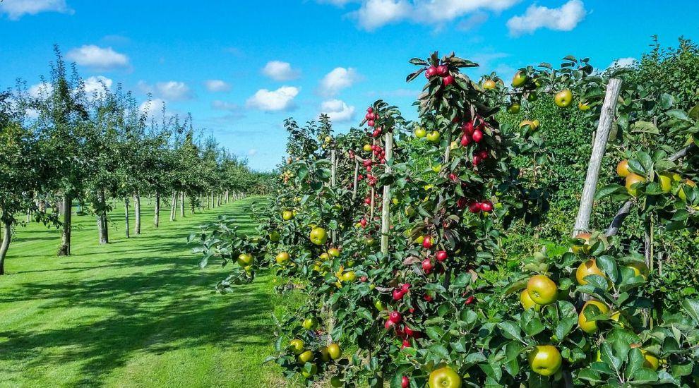 (P) Cand se stropesc pomii fructiferi?