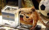 Un patron de restaurante din Spania scoate caracatita din meniu, din respect!
