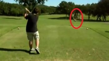 Senzational! Un jucator de golf a trimis mingea in capul unui cerb :)
