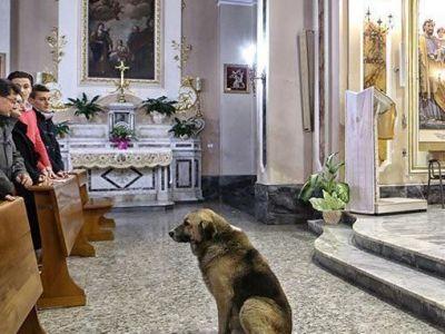 Durerea cainelui care suspina in tacere: Preotii nu au curaj sa-l dea afara din biserica! De ce nu vrea sa plece: