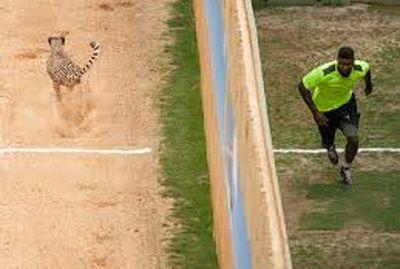 Nebunie curata! Cei mai rapizi sportivi s-au luat la intrecere cu un ghepard! Cum s-a terminat cursa: VIDEO