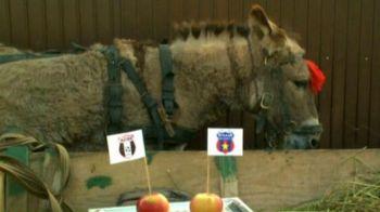 SUPER VIDEO. Magarita oracol din Las Fierbinti a ales cine va castiga Cupa Romaniei! Reghe a inceput sa rada cand a vazut asta