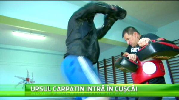 "Un roman s-a antrenat cu Saki si Overeem! ""Ursul Carpatin"" se bate in cusca in direct la Sport.ro, luni de la 21:00"