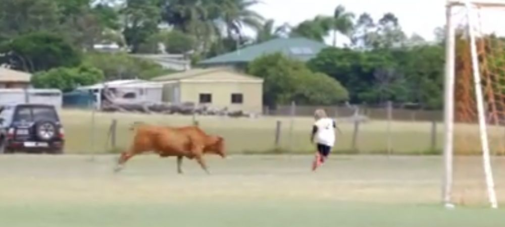 Vaca nu eVITA :)) Scene senzationale la un meci de fotbal din Australia! O vaca a intrat pe teren si i-a alergat pe jucatori. VIDEO
