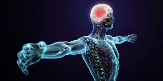 Un nou organ a fost descoperit in corpul uman! Cartile de medicina trebuie rescrise