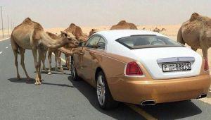 10 lucruri extrem de scumpe pe care si le permit doar milionarii din Dubai