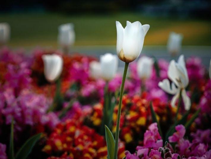 (P) Top 4 reguli de culoare, când îți amenajezi grădina