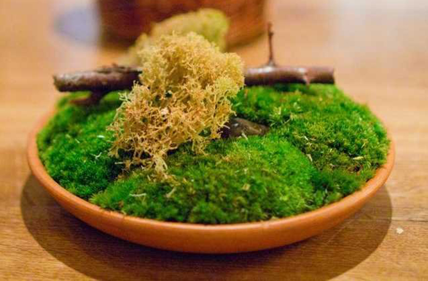 Licheni, creveti pe gheata si morcovi deshidratati. Cum este sa mananci la Noma, cel mai bun restaurant din lume