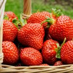 Fructul saptamanii: Capsuna