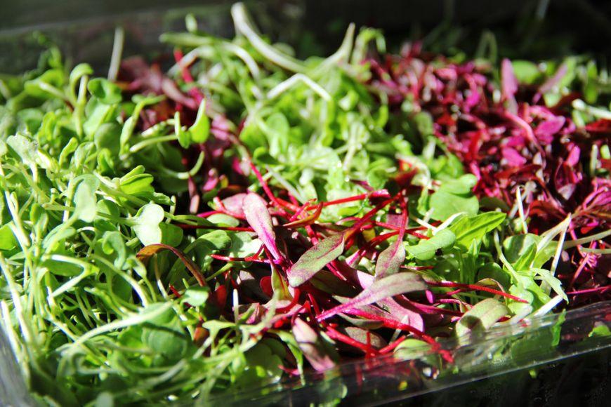 O salata in miniatura. Micro-verdeturile, noile vedete din farfurie