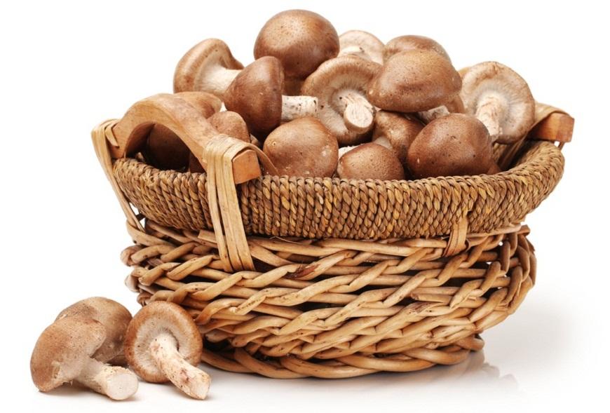 5 lucruri fascinante pe care nu le stiai despre ciuperci