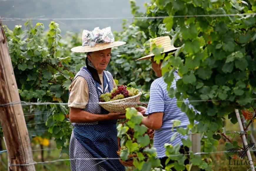 Povestea cramei Liliac. Cum a reusit un austriac sa faca vinuri premium in inima Transilvaniei