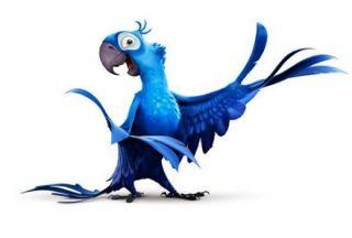 Rio: samba cu papagali