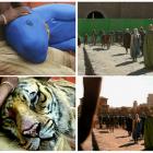 Cum arata filme si seriale celebre inainte si dupa adaugarea efectelor speciale: vezi cum au fost create scene populare din The Hobbit, Game of Thrones sau Life of Pi