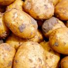 (P) De ce trebuie plantați cartofii timpuriu?