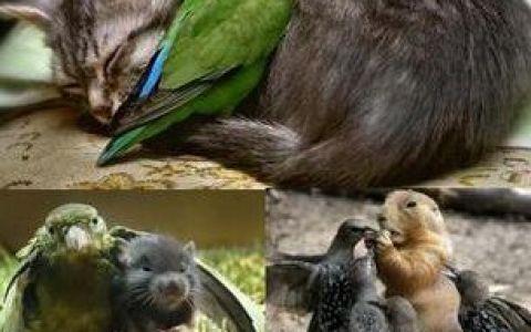 Prietenii intre animale: GALERIE FOTO