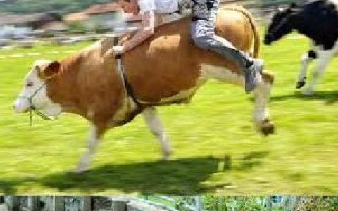 Calare pe alte animale decat calul: broasca testoasa, porc sau crocodil! FOTO