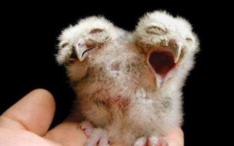 Curiozitati: Animale cu doua capete! FOTO